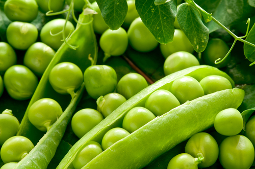 Green peas in the pod up close. Picture food ingredients